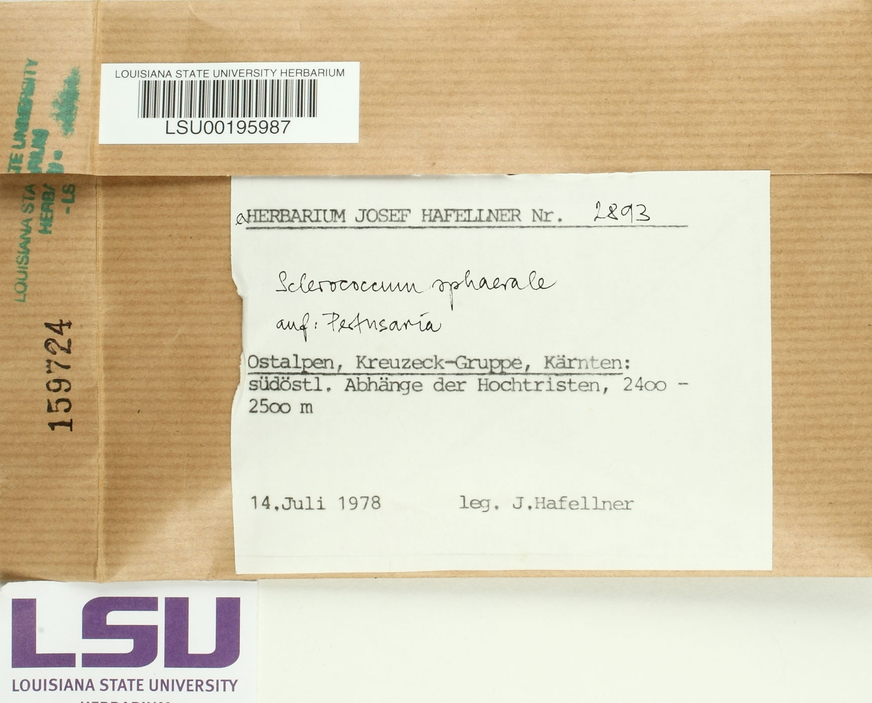 Sclerococcum sphaerale image