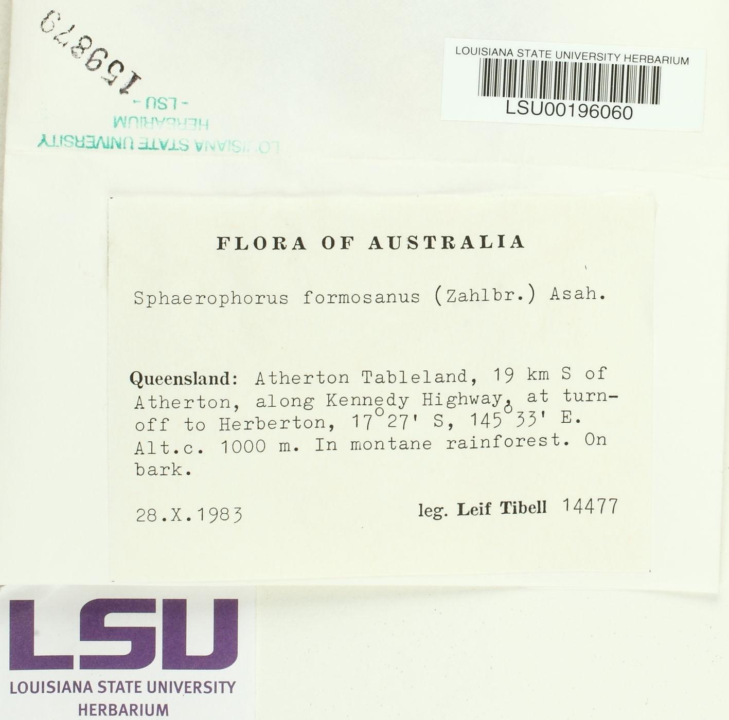 Sphaerophorus formosanus image