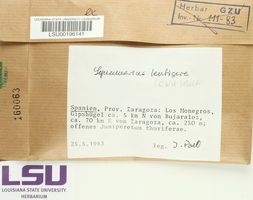 Squamarina lentigera image