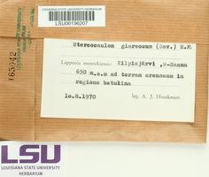 Stereocaulon glareosum image