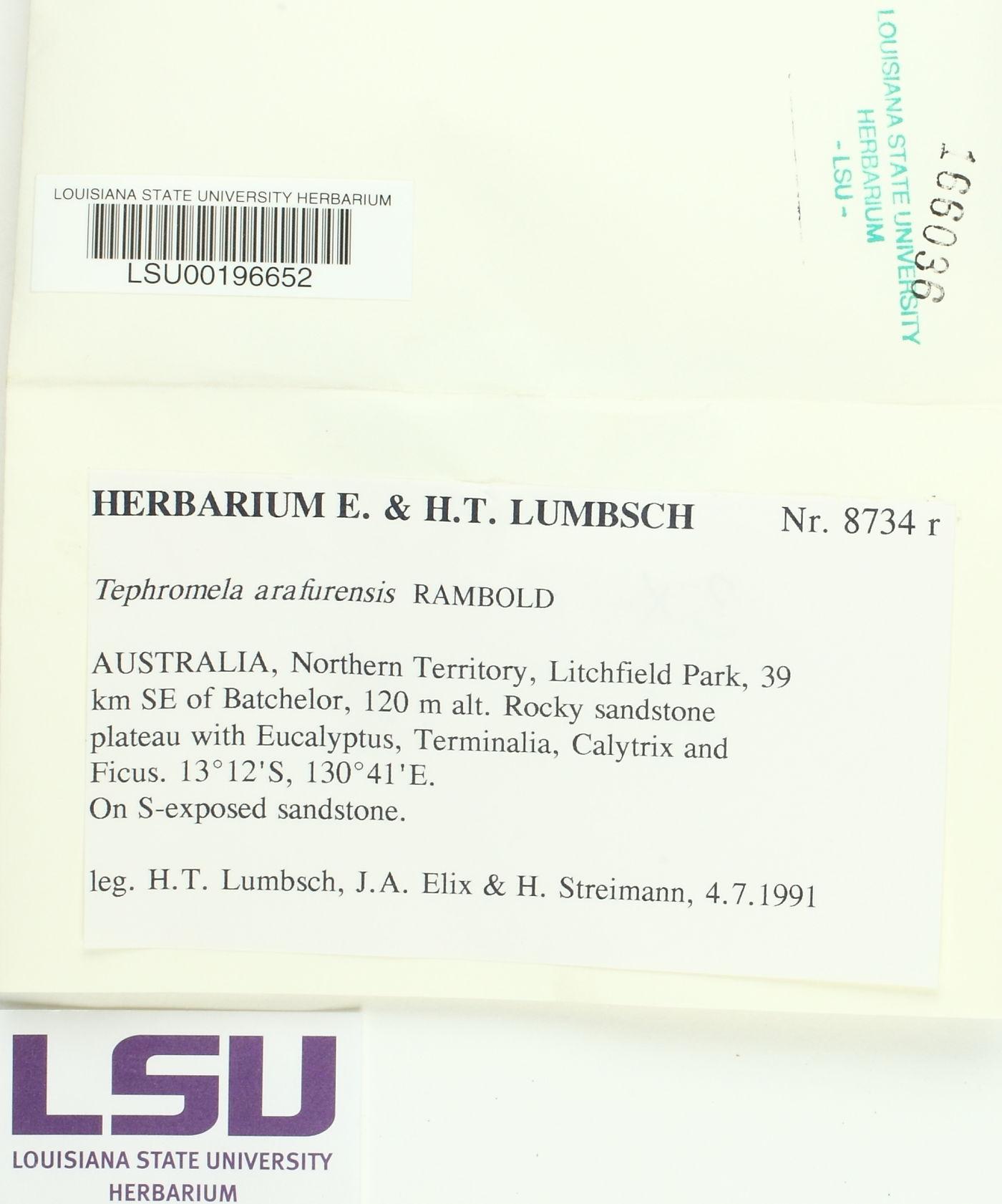 Tephromela arafurensis image