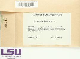Lichinella nigritella image