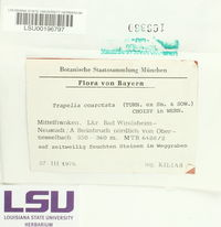 Trapelia coarctata image