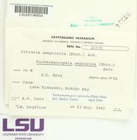 Tuckermanopsis sepincola image