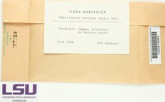 Umbilicaria arctica image
