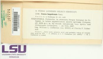 Image of Usnea bogotensis