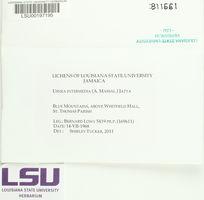 Usnea intermedia image