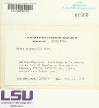 Usnea subgracilis image