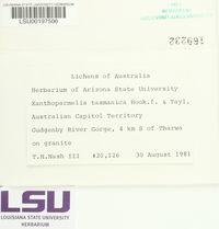 Xanthoparmelia tasmanica image