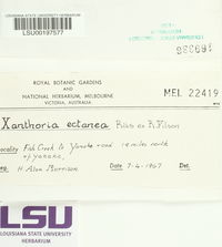 Image of Xanthoria ectanea