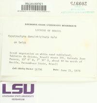 Hypotrachyna subgen. Longilobae image