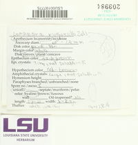 Lecanora rugosella image